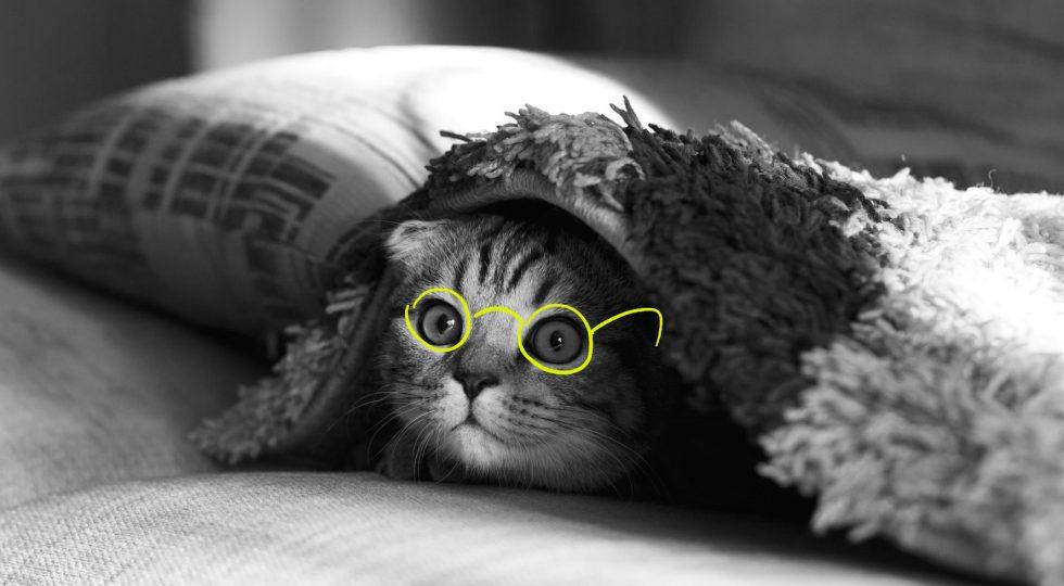 a cat wearing eyeglasses